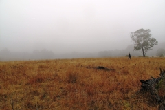 Misty-walk-to-top-paddock-then-breakfast-010