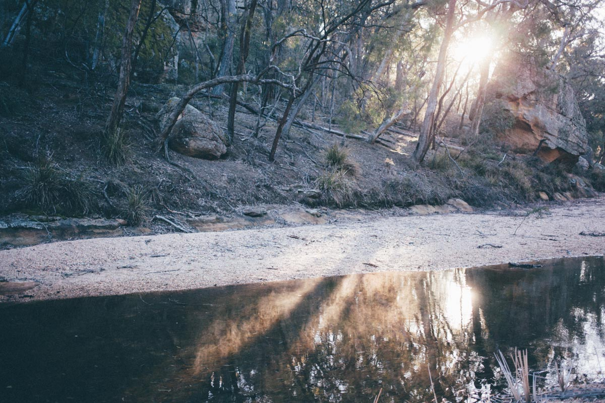 Seasons can vary - morning light on a bleached bushland during the latest big dry