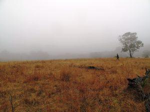 Misty walk to top paddock then breakfast 010