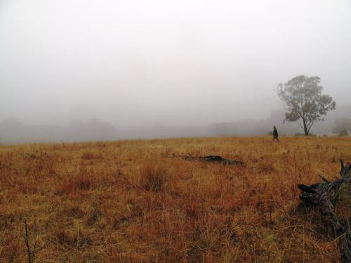 Misty walk to top paddock